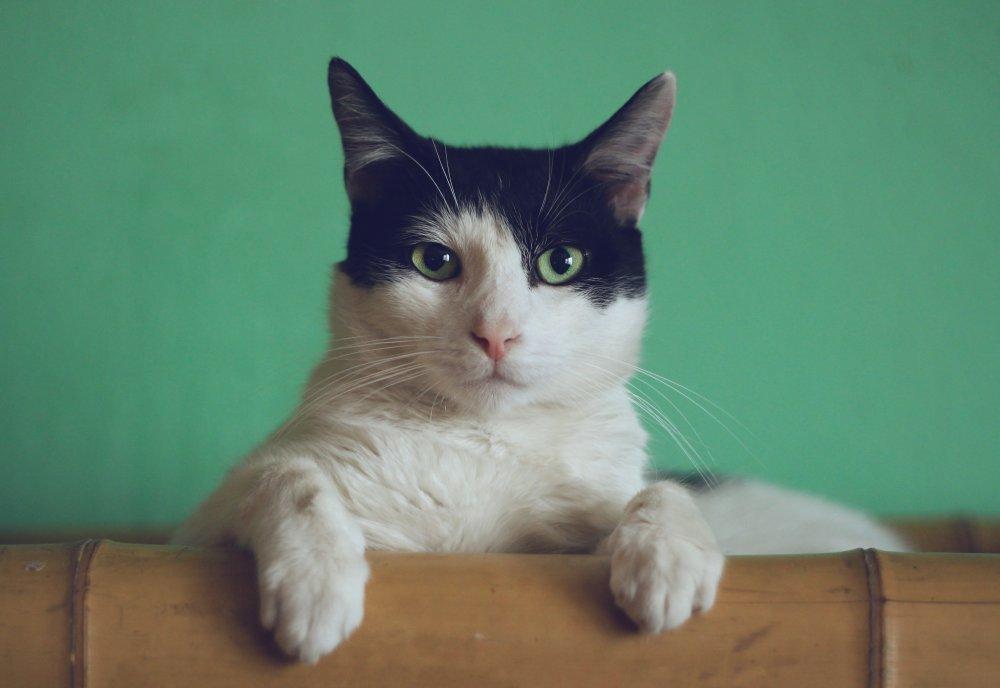 En katt behöver bra kattsand